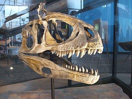 crylophosaurus